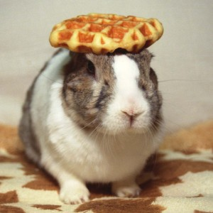 Because you've made it this far, have a picture of Oolong the rabbit with a waffle on his head.