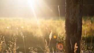 Summer Field, from Pexels: http://www.pexels.com/photo/field-summer-sun-meadow-625/
