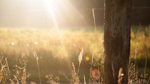 Summer Field, from Pexels: http://www.pexels.com/photo/field-summer-sun-meadow-625/